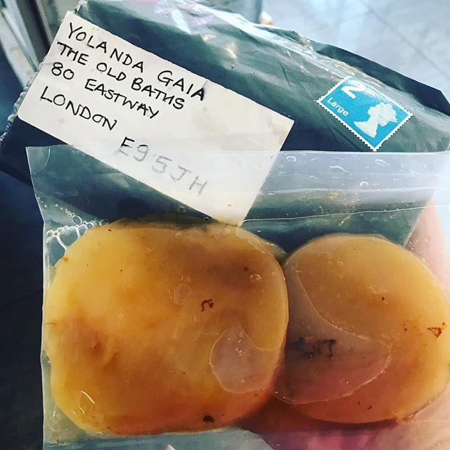 A friend said would put something on the post for me. Surprise!!! No letter 🥁 just these guys 😅. Scoby twins 👯 arrived to make kombucha at @theoldbaths! Everyone is super excited!  A new adventure is about to begin! Thank you @recycledeyes 👁 👁 💥💥🌳🌳🛁🛁🌞🌞#homemadekombucha #scoby #scobylove #madeinhackneywick #plantbasedcafe #ferment #fermenting #forlife