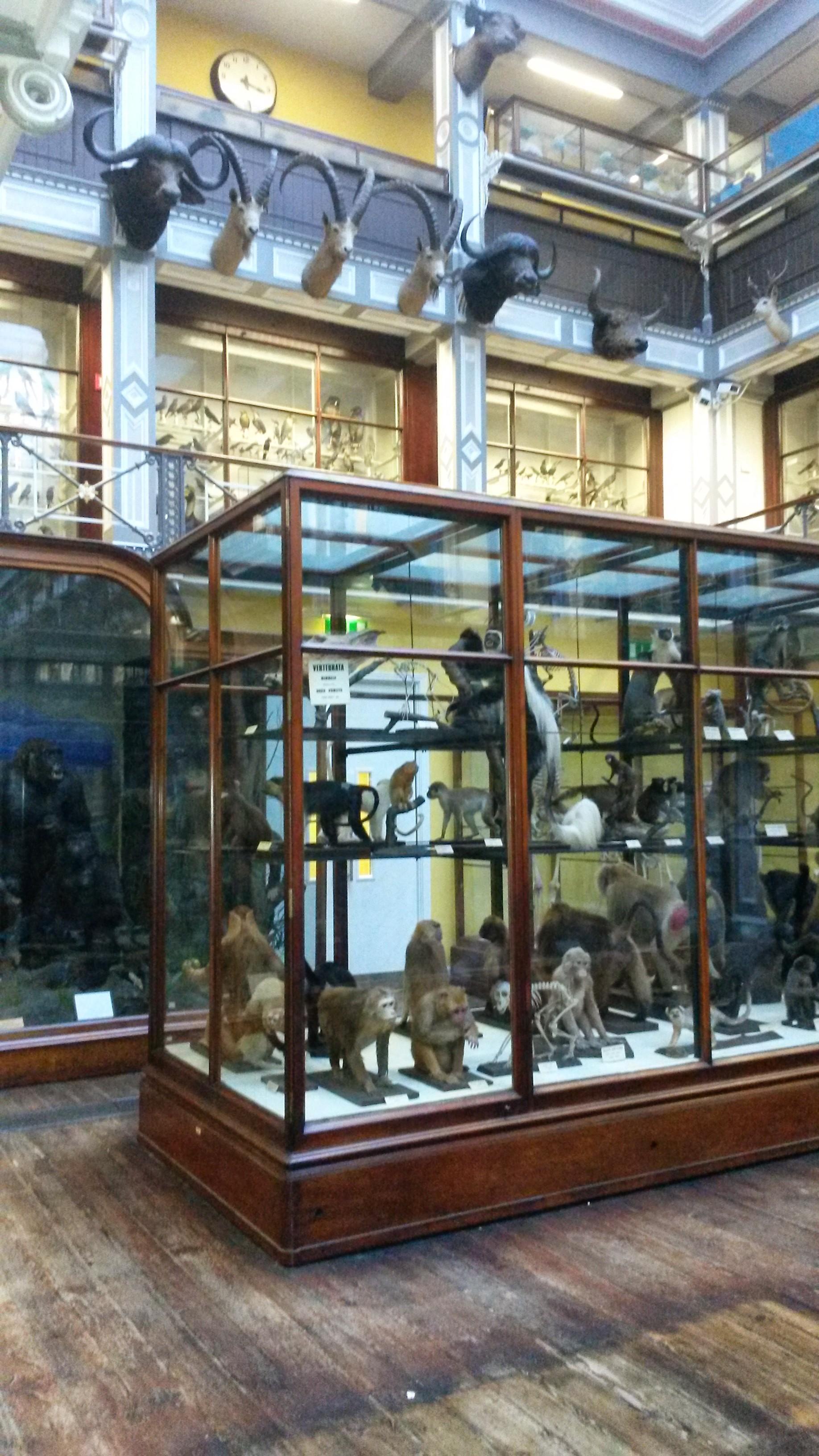 Natural History Museum (2).jpg