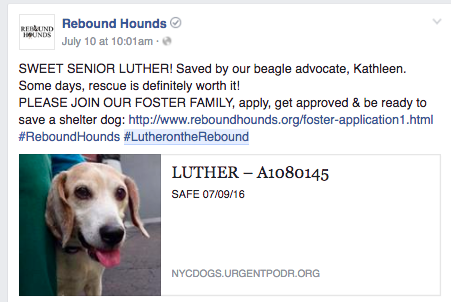 When Rebound Hounds, a NYC-based rescue group pulled sweet Luther from the ACC, they immediately made him a hashtag #lutherontherebound
