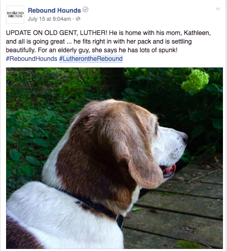 WHEN REBOUND HOUNDS POSTED AN UPDATE ON LUTHER, THEY REMEMBERED TO USE HIS HASHTAG SO THAT NOW IF SOMEONE WANTS TO QUICKLY FIND OUT MORE INFO ON LUTHER THEY CAN JUST CLICK HIS HASHTAG VERSUS SPENDING TIME SIFTING THROUGH A BUNCH OF POSTS