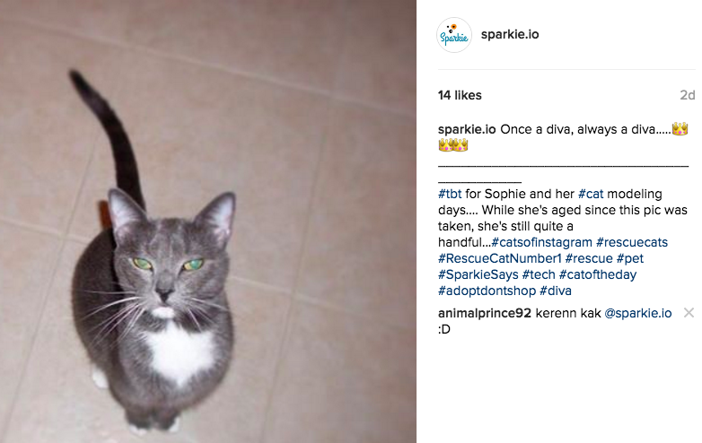 For this post we used hashtags in a few different ways. First we used the popular and common #tbt (throwback thursday) hashtag to reach a broader audience. Then we used a couple hashtags unique to our company (#SparkieSays and #tech), a couple relevant to the post itself (#diva) and the rest related to animal/rescue themes (#rescuecats, etc)