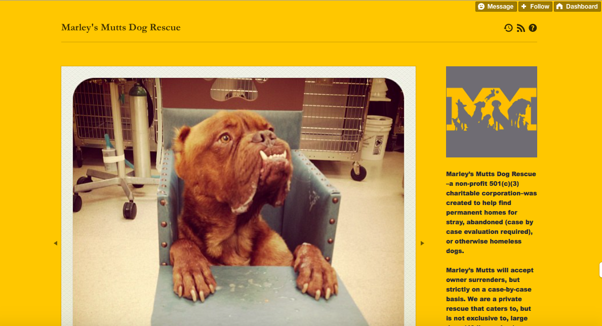 Marley's Mutt Dog Rescue also showcases their adoptables with heart warming stories. However, they chose a theme that really emphasizes the images - creating a great visual aesthetic.