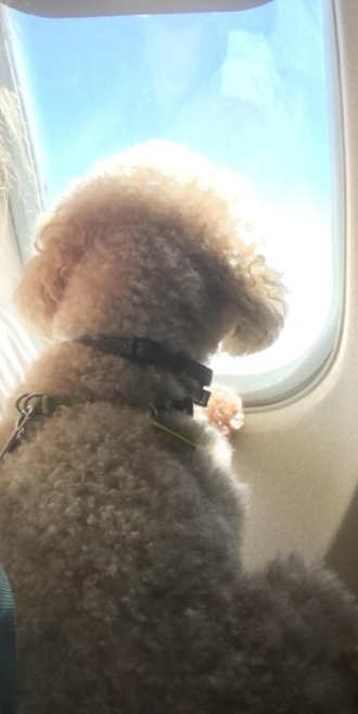 Like Brownie here in his very own plane seat, we see the possibilities for all rescuers getting access to better technology!