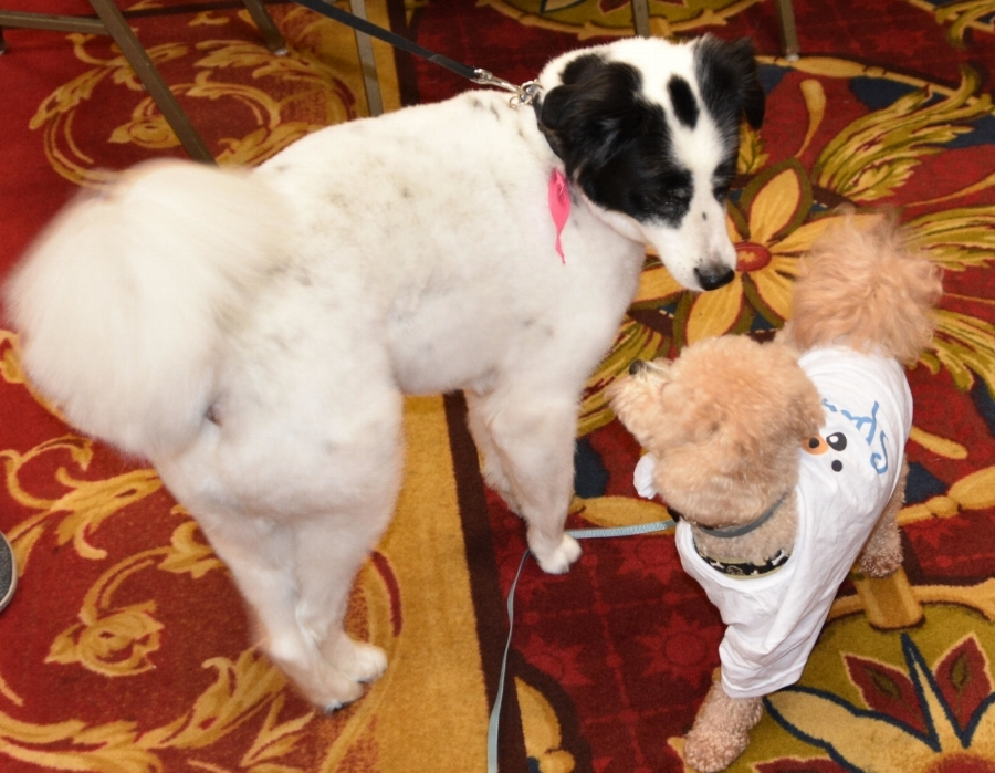 """""""So, what do you think about data?"""" Brownie asks a fellow canine attendee (by the way, check out his cool Sparkie t-shirt!"""