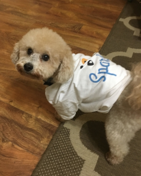 Brownie preps for his important role of attention grabber and Sparkie ambassador at the MADKY conference…we think he did a pretty good job :)