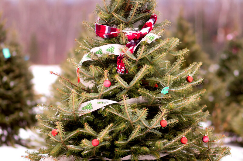 Christmas tree decorated.jpg