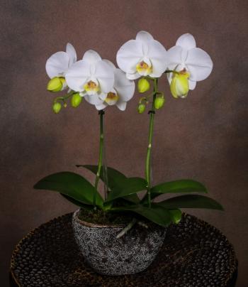 Florist NYC