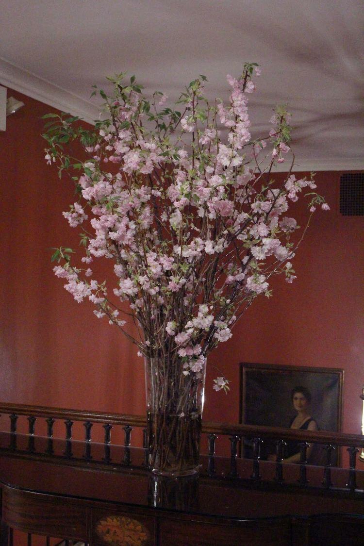 cherry+blossoms1.jpg