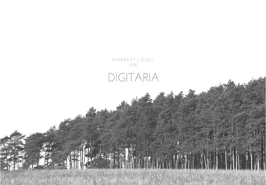 Digitaria-1 copy.jpg