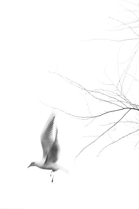 15-02-21-Park-Vogel_0167.jpg