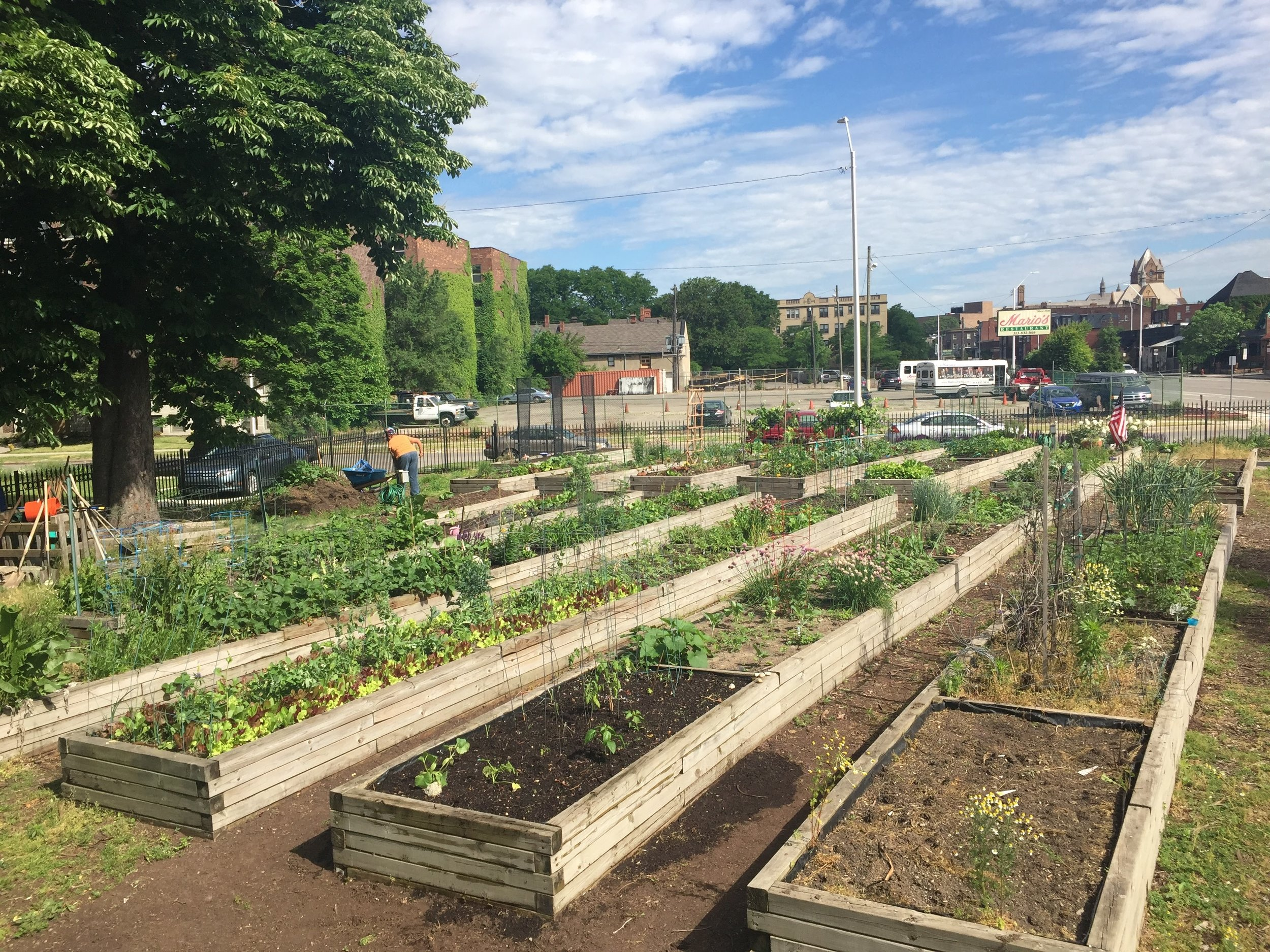 The effects of urban agriculture on wild bee communities - Smith Fellows postdoctoral research programhttps://conbio.org/mini-sites/smith-fellows/meet-the-fellows/2015-fellows/rebecca-tonietto