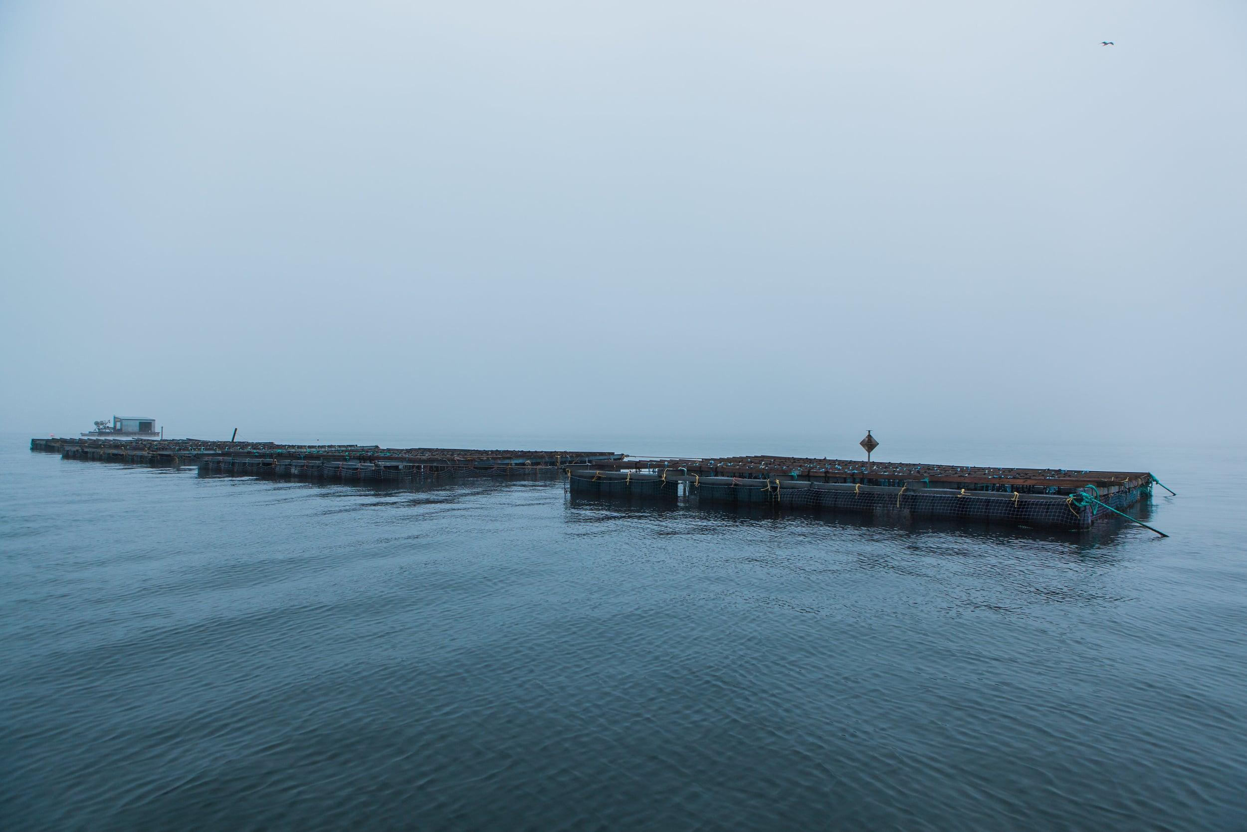 Bangs-Island-Mussels-3.jpg