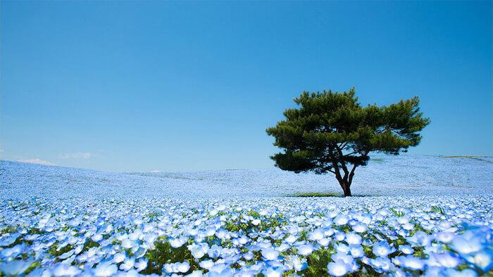 Hitachi-Seaside-Park-1.jpg