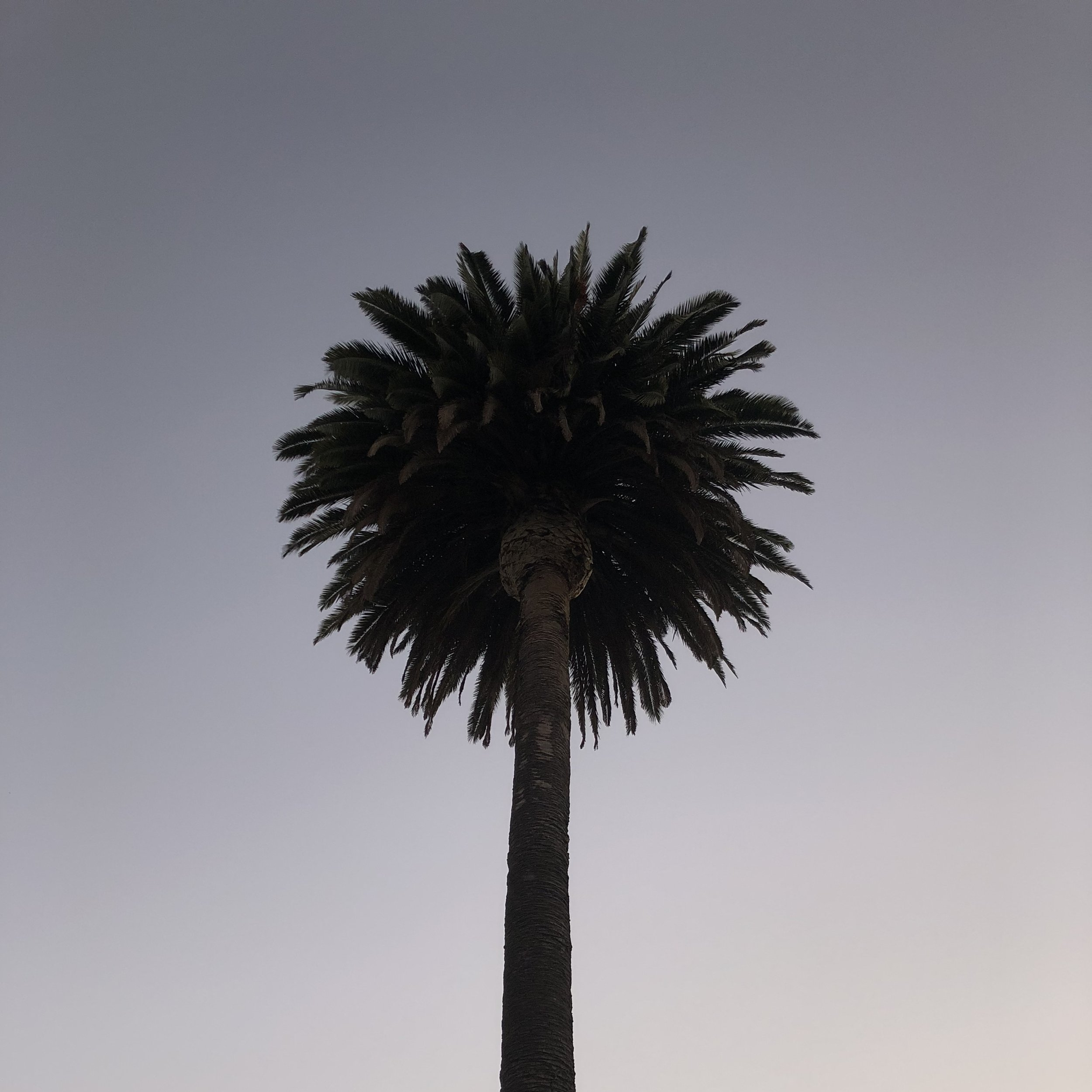 Palm silhouettes.