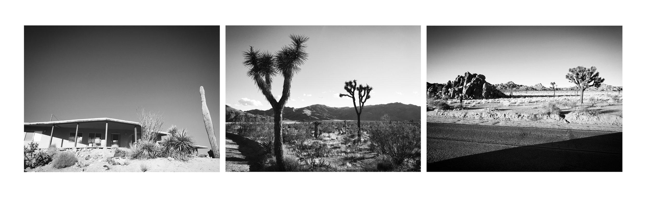 cactus arrnage1.jpg