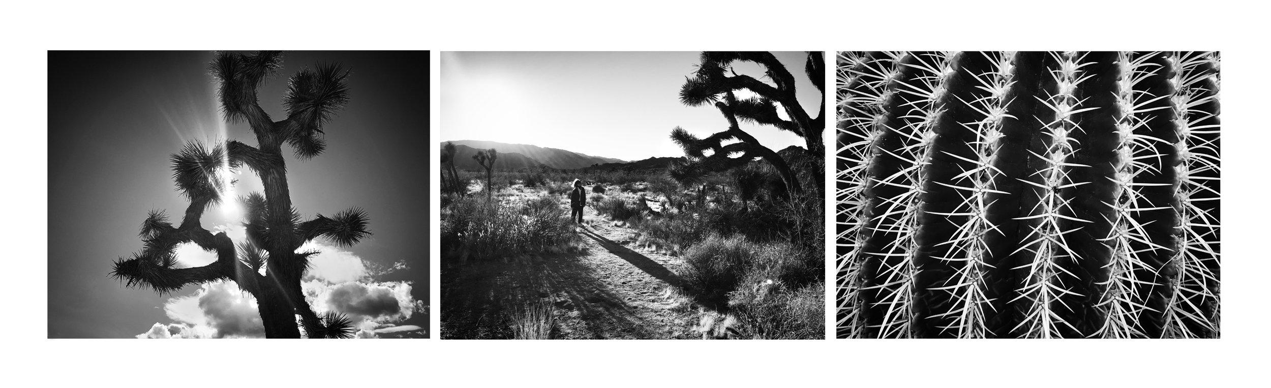cactus arrnage3.jpg