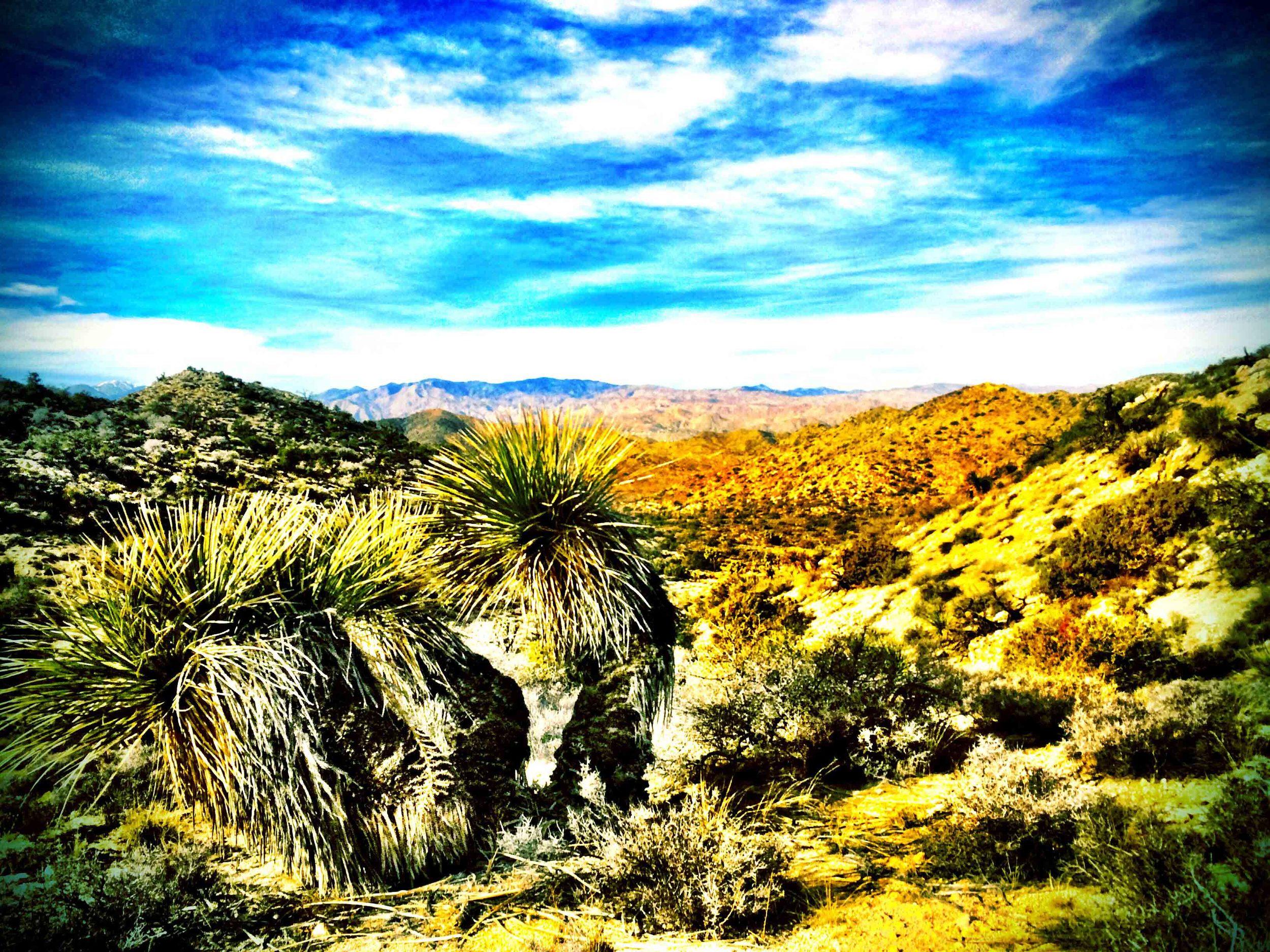 Palm Desert, California, December 2015