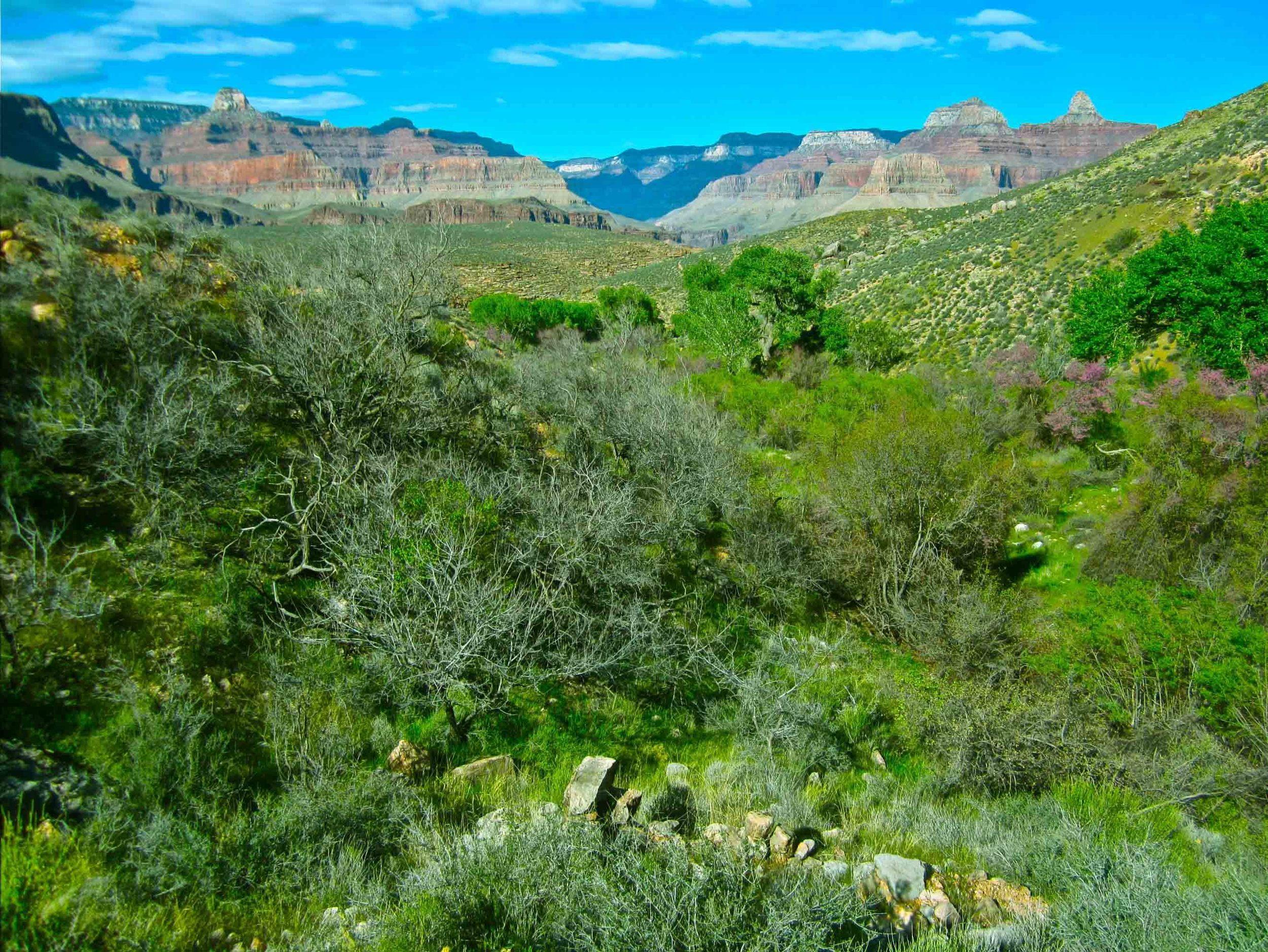 Indian Gardens, Grand Canyon, April 2012