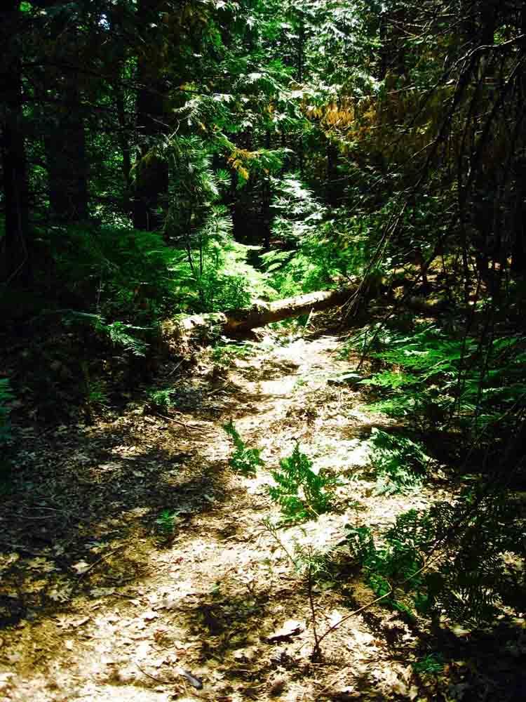 Yosemite National Park, California, July 2008