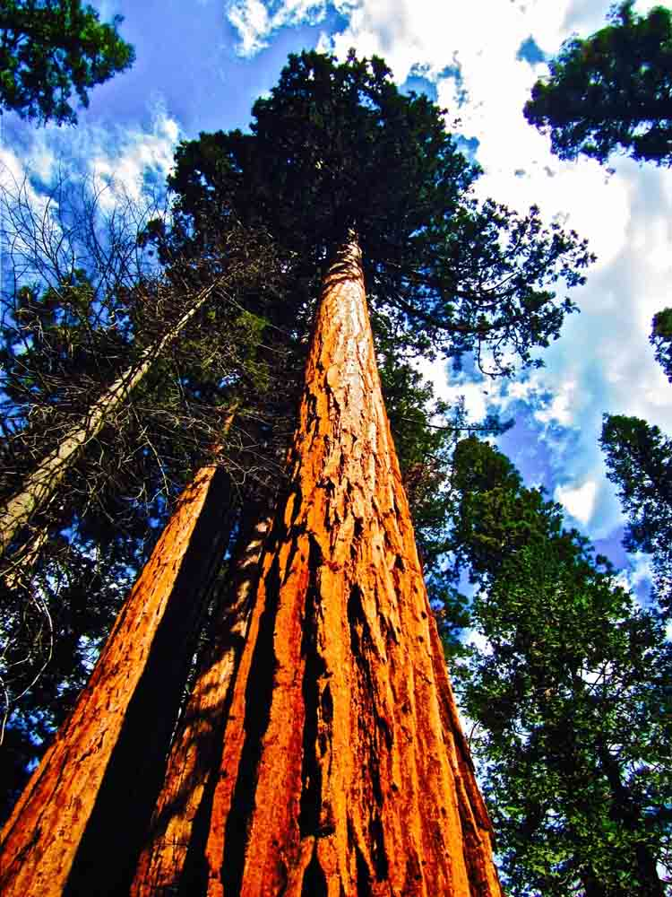 Sequoia National Park, California, August 2011