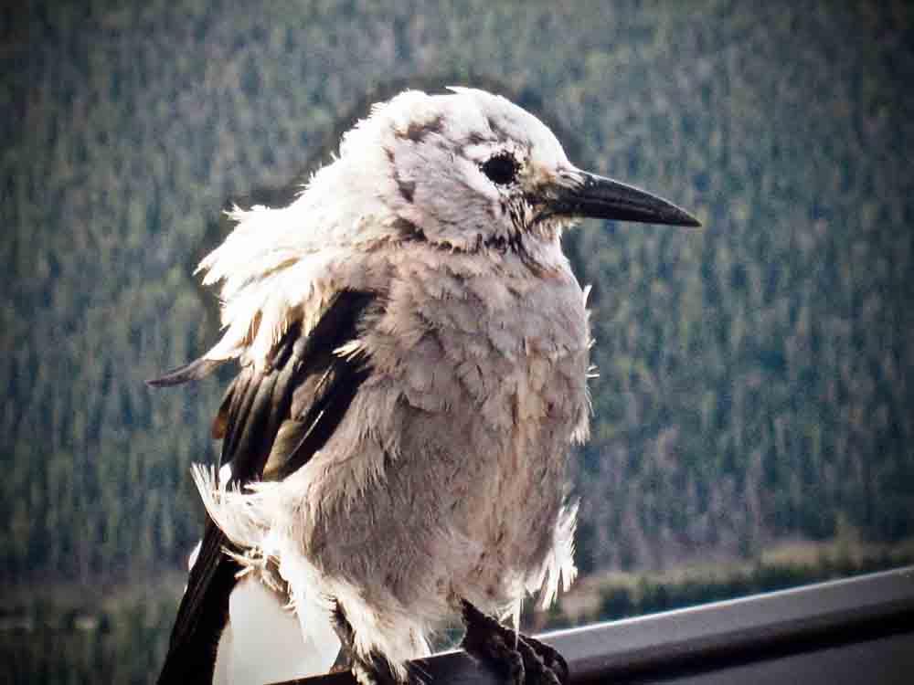 Rocky Mountain National Park, Colorado, August 2010