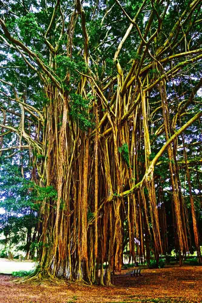 Big Island, Hawaii, July 2012