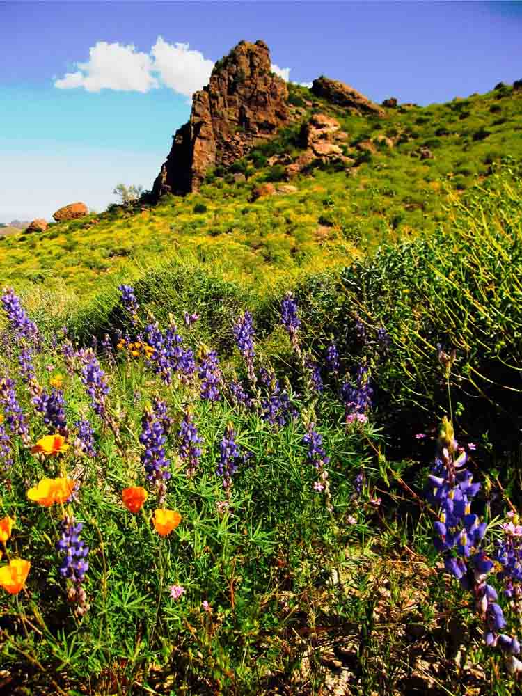Superstition Mountains, Arizona, April 2010