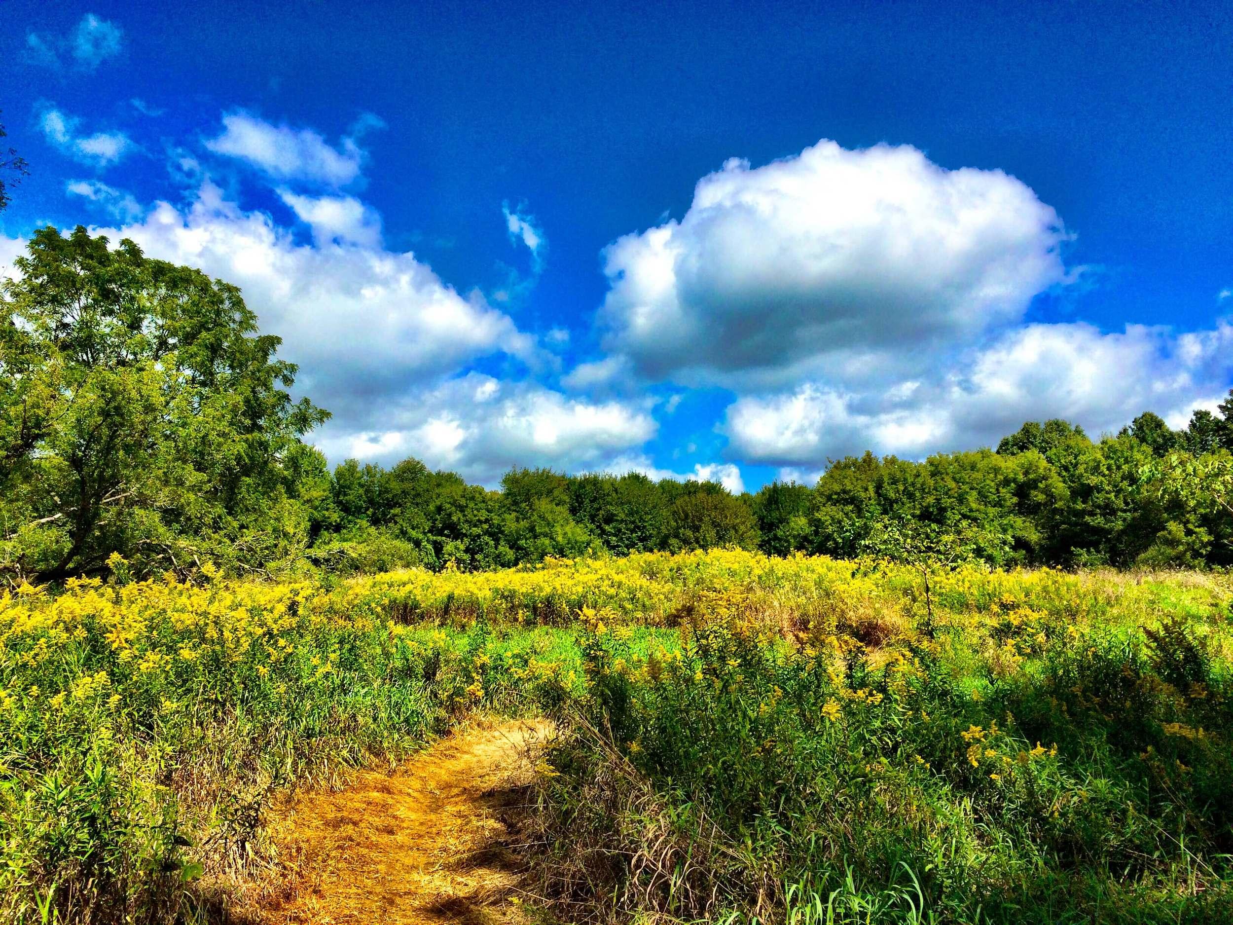 Sleepy Hollow State Park, Michigan, July 2015