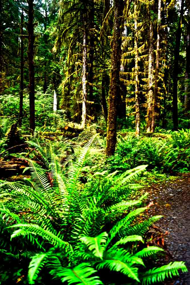 Hoh Rain Forest, Olympic National Park, July 2014