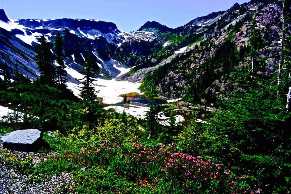 Fire and Ice Trail, Washington, July 2014