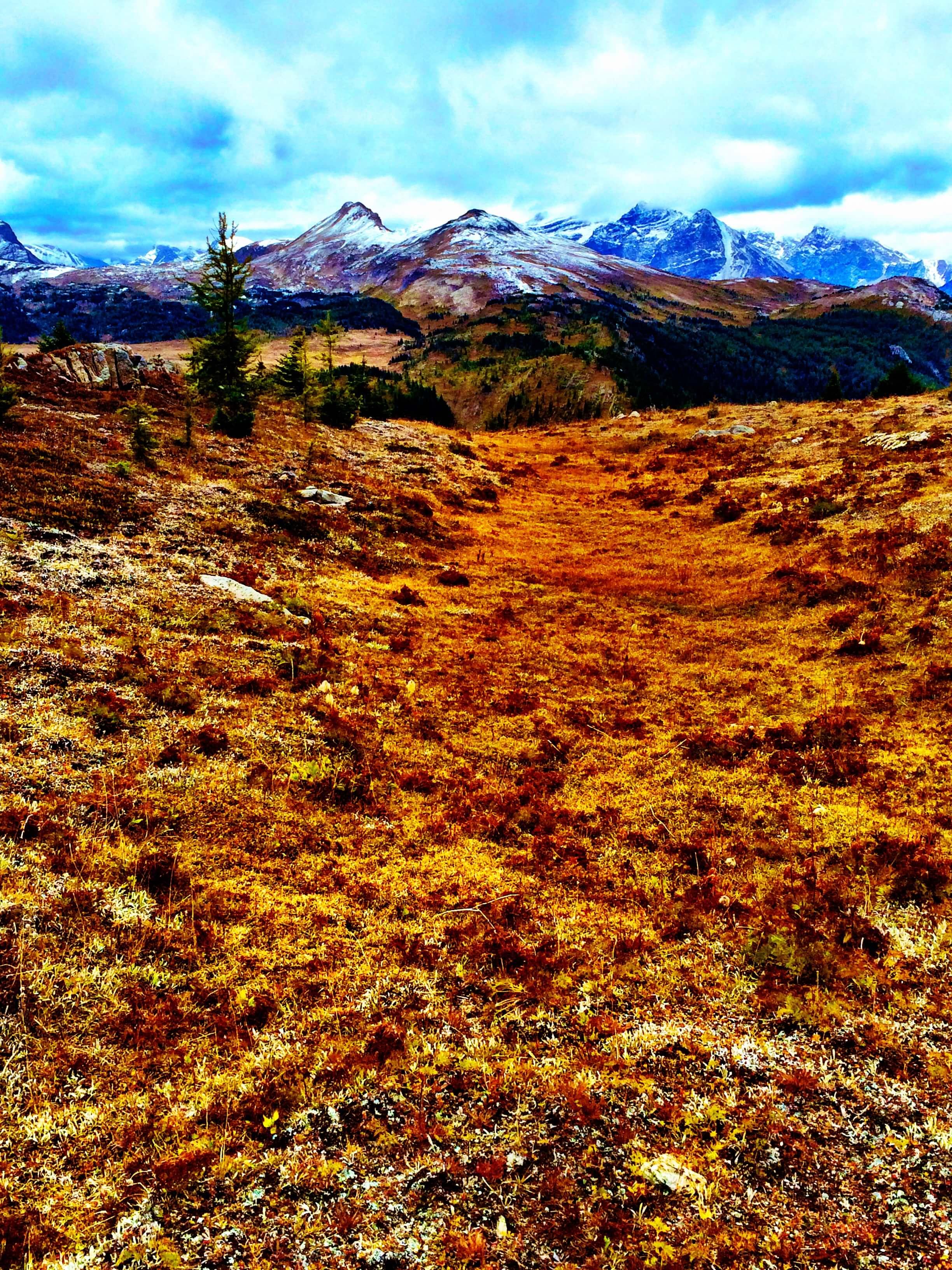 Sunshine Meadows, Alberta, Canada, September 2015