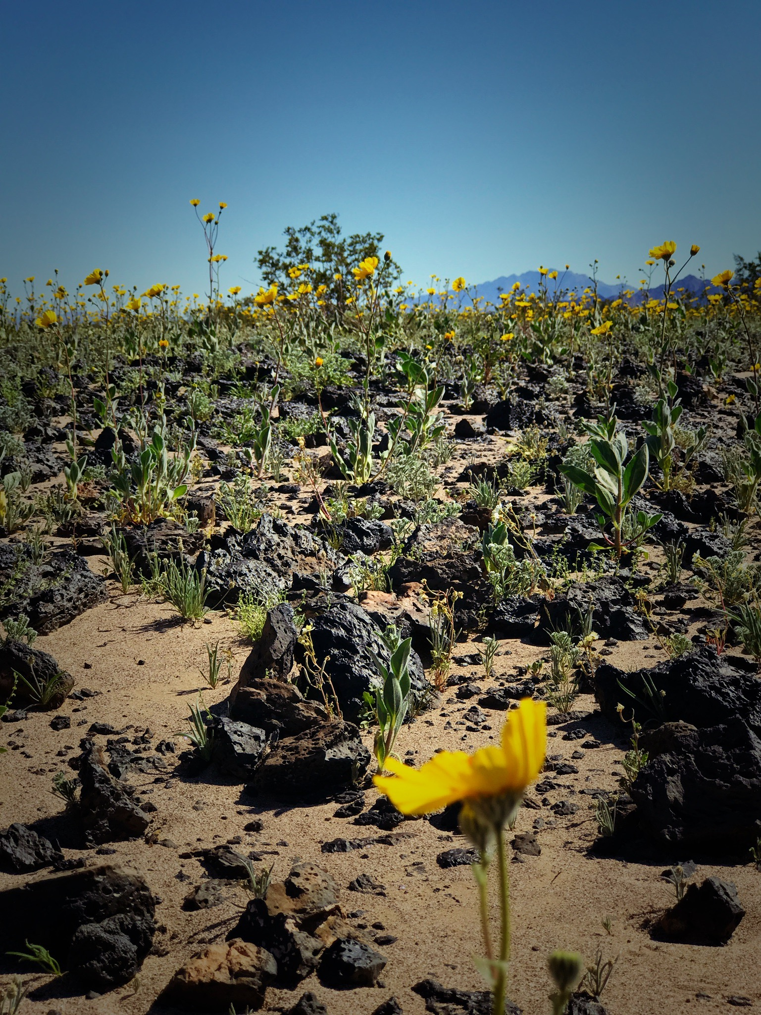 Mojave Desert, March 2017