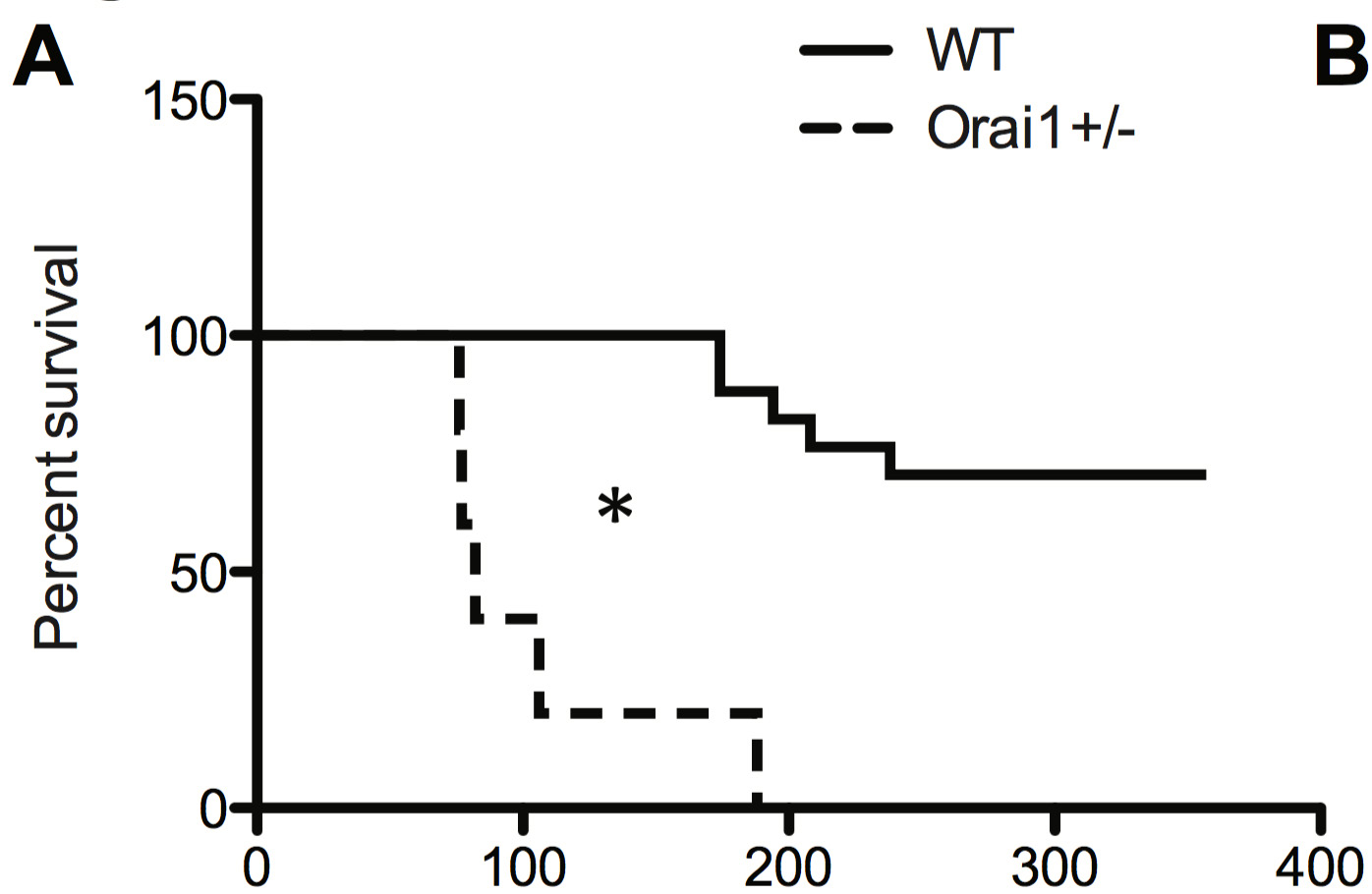 [21] Knock out Orai1 causes rapid left ventricular dilation and early death, in mice modeled for heart failure (TAC).