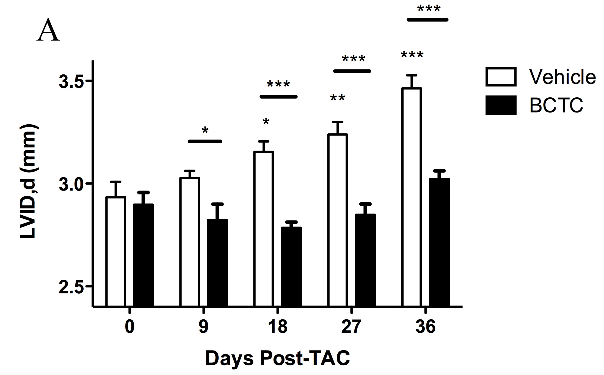 [18] Treating mice with a TRPV1 inhibitor (BCTC)protects the heart from heart failure. In untreated mice, the ventricle dilates (Vehicle).