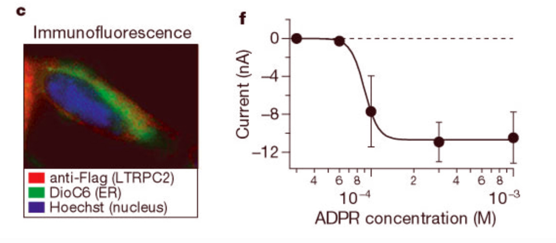 [2] TRPM2 expression, and ADPR gating