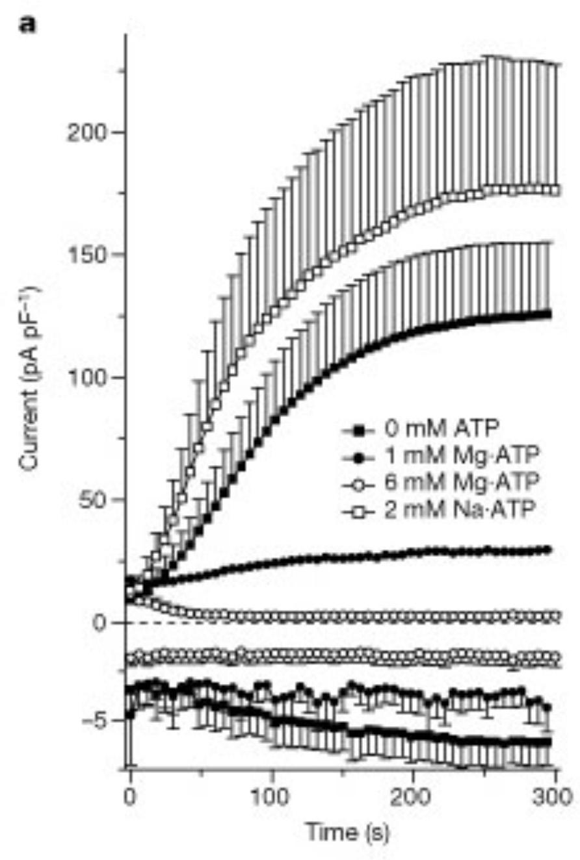 [2] TRPM7 regulation by Mg•ATP.
