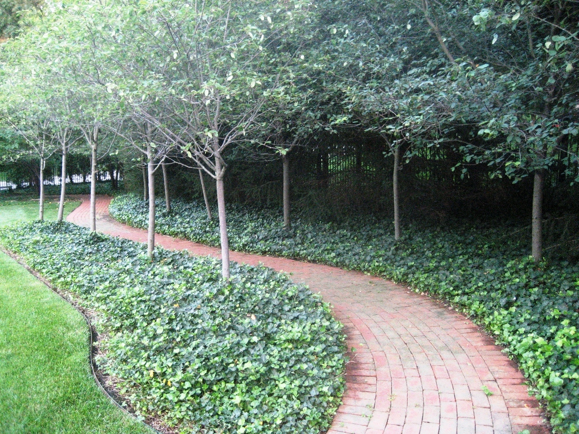 green-path.jpg
