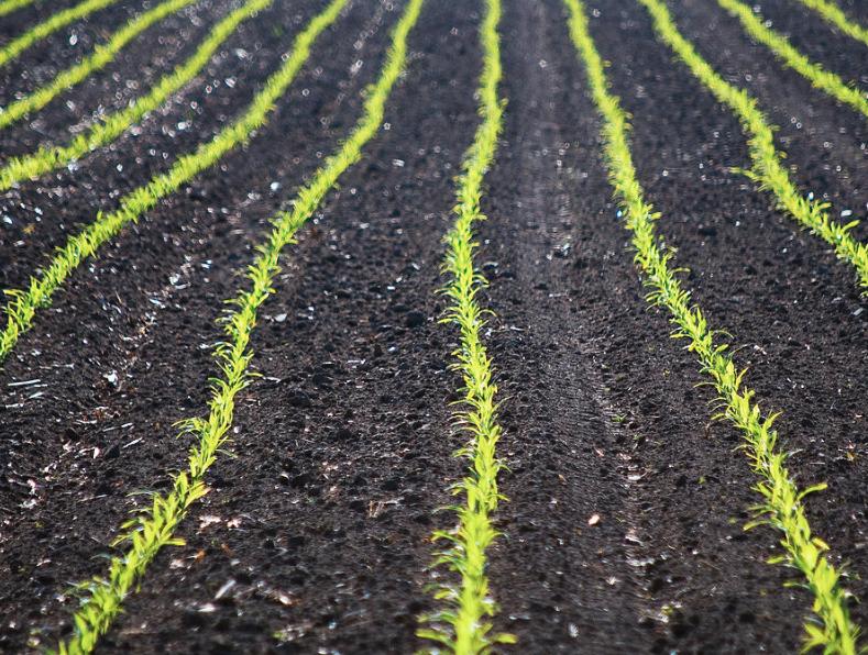 crop-rows1.png