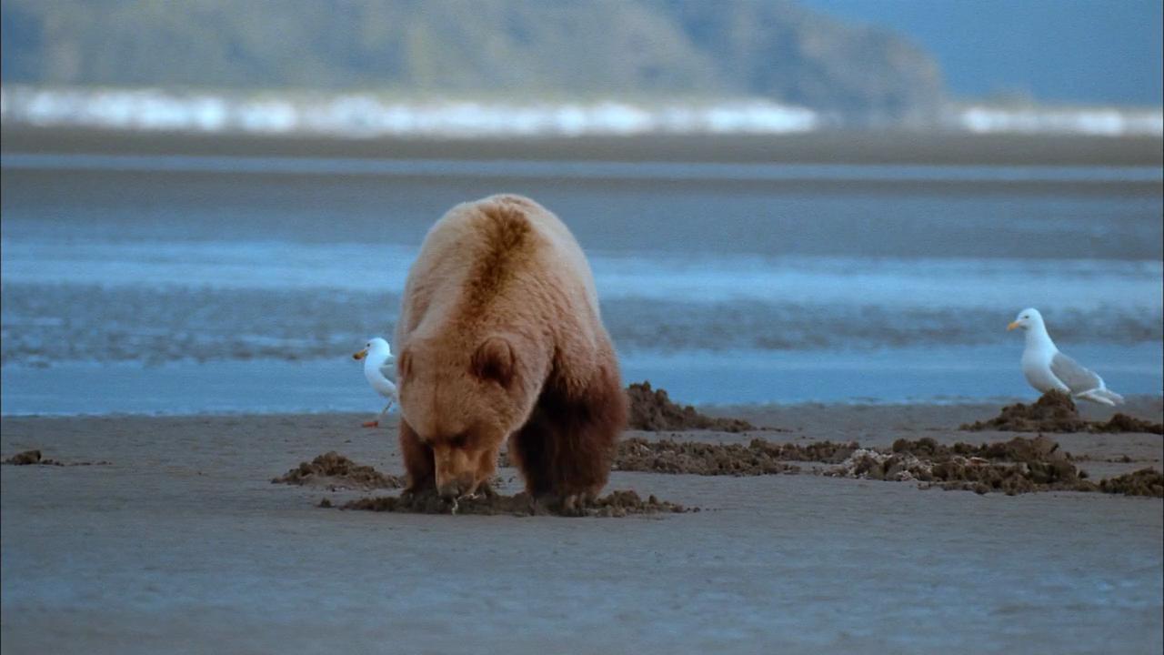 Alaska_01.png