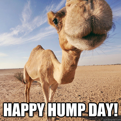 123355-Happy-Hump-Day.jpg