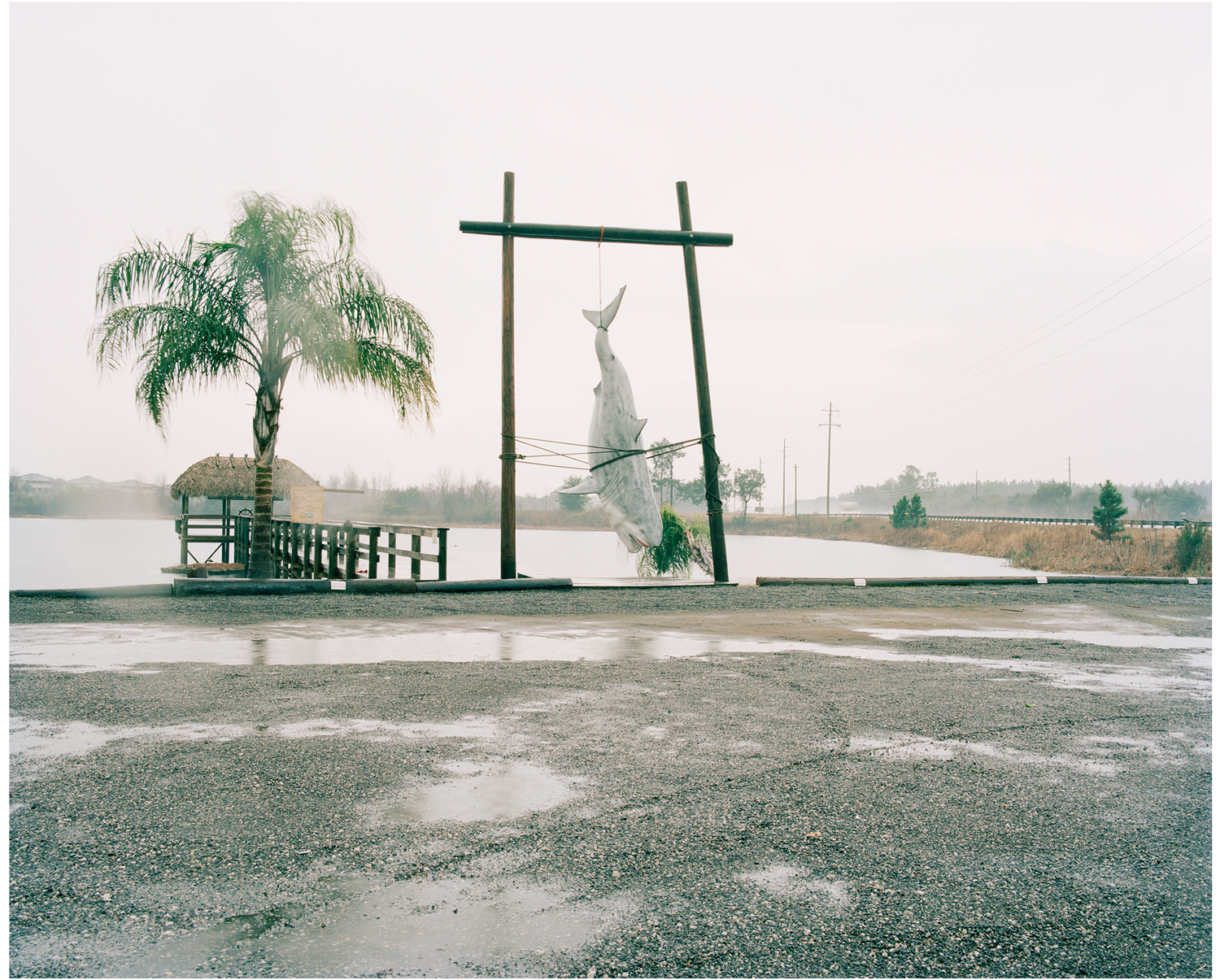 Shark, Highway 27, Florida, 2011
