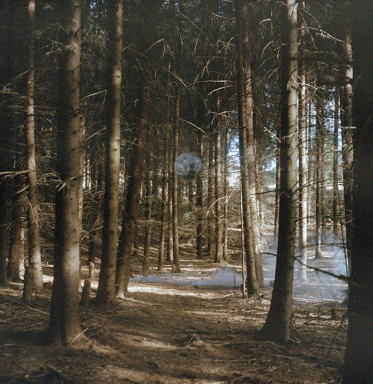 Lunar Forest