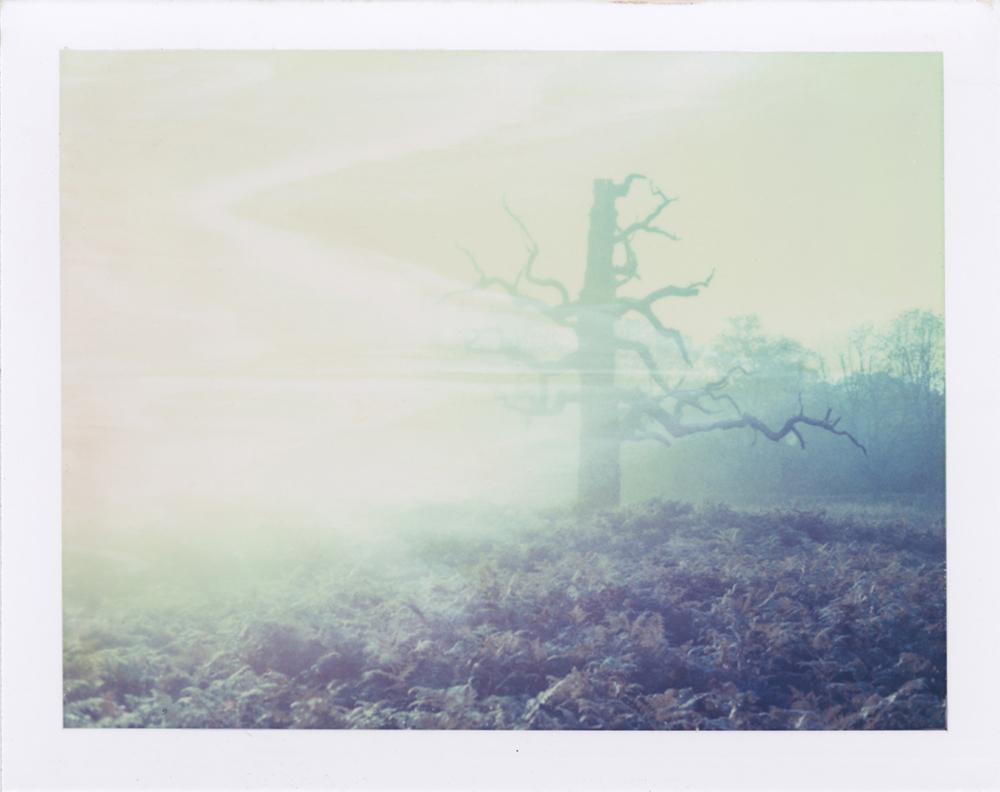 27.foggytree2_lowres.jpg