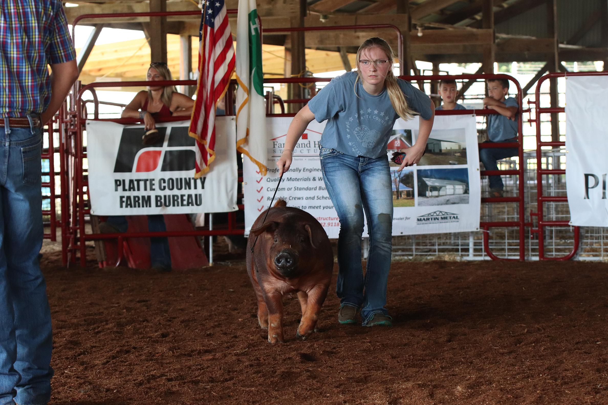 Livestock 1.jpg