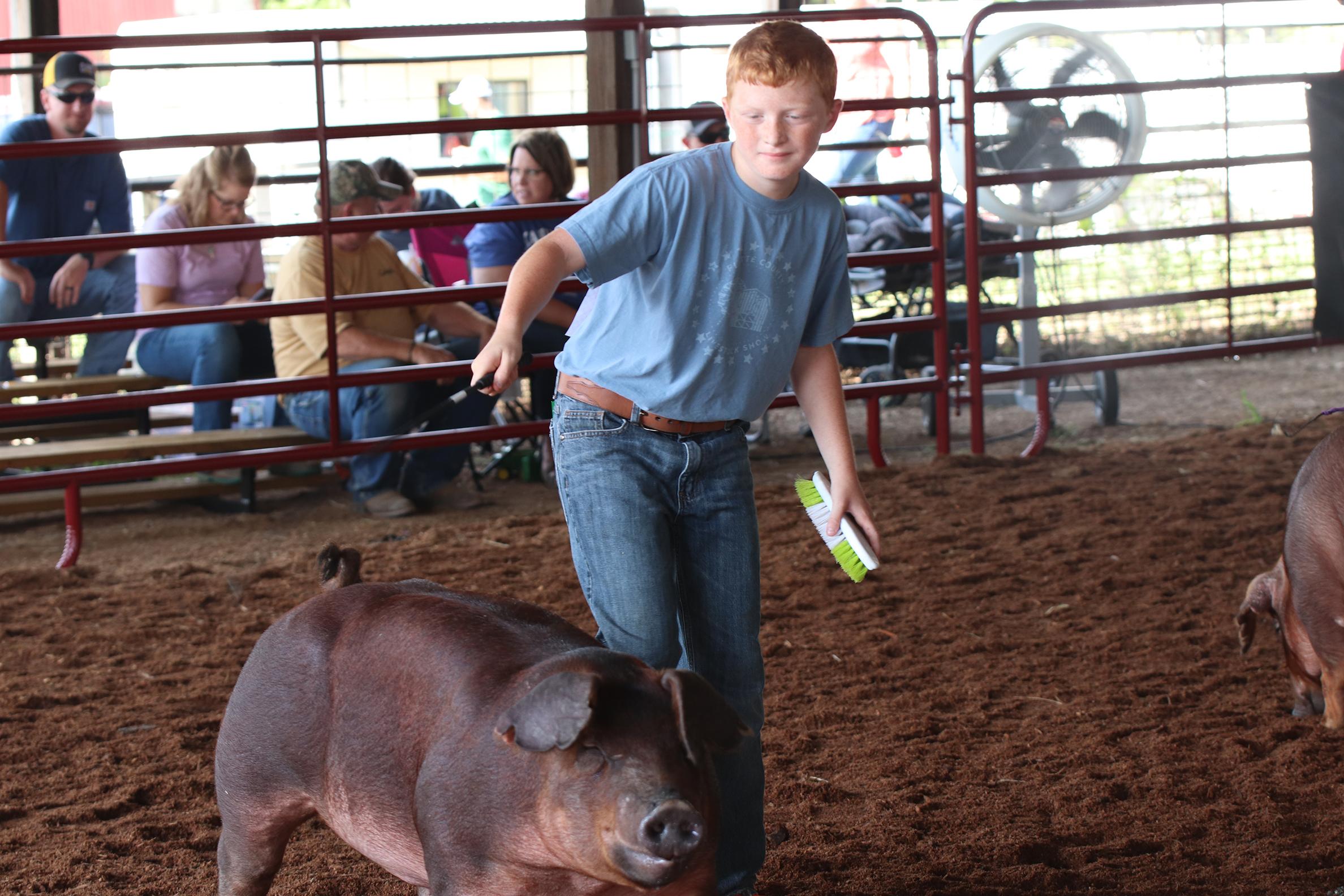 Livestock 3.jpg