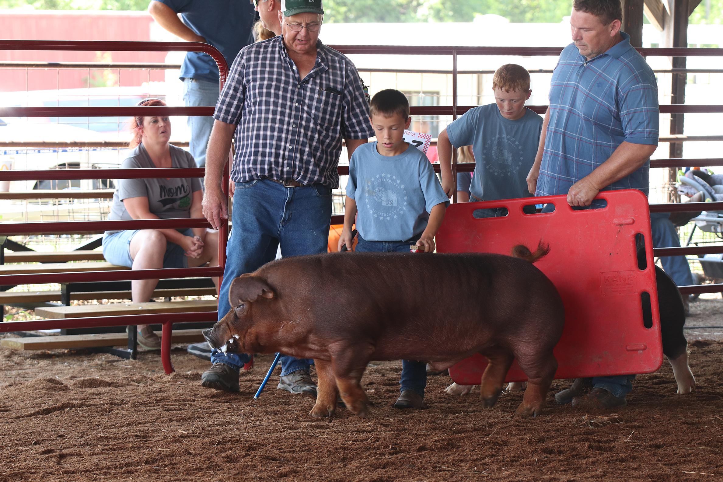 Livestock 4.jpg