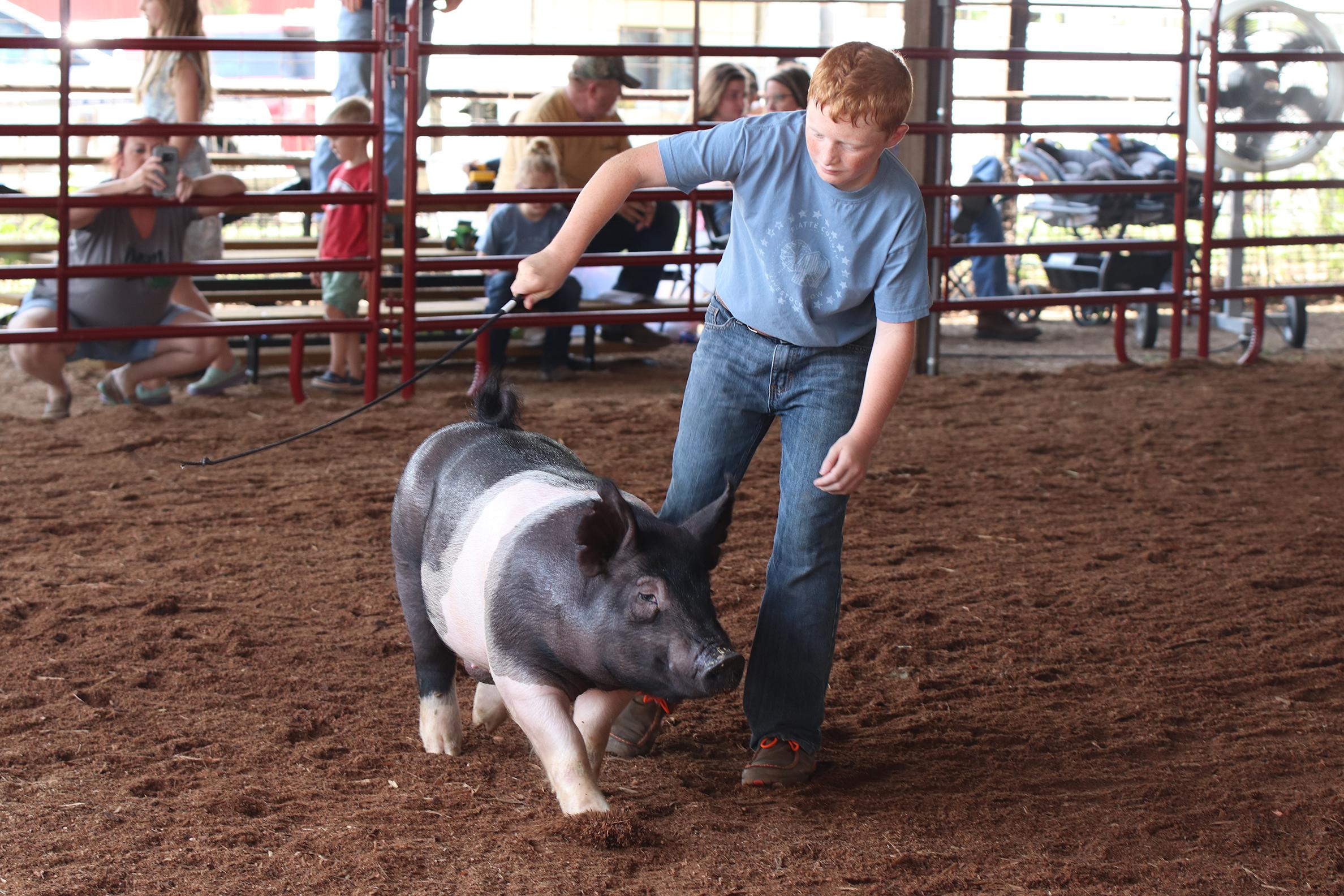 Livestock 6.jpg