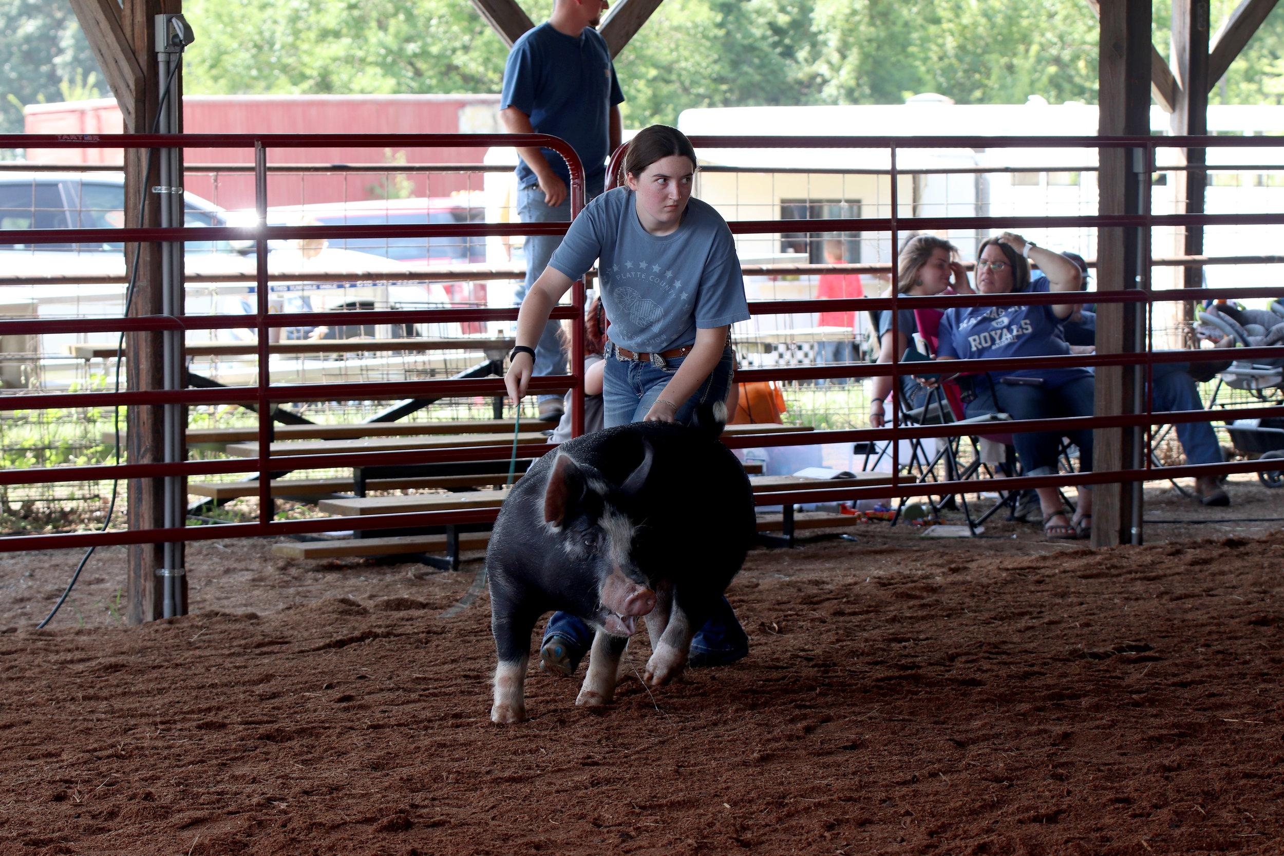 Livestock 5.jpg