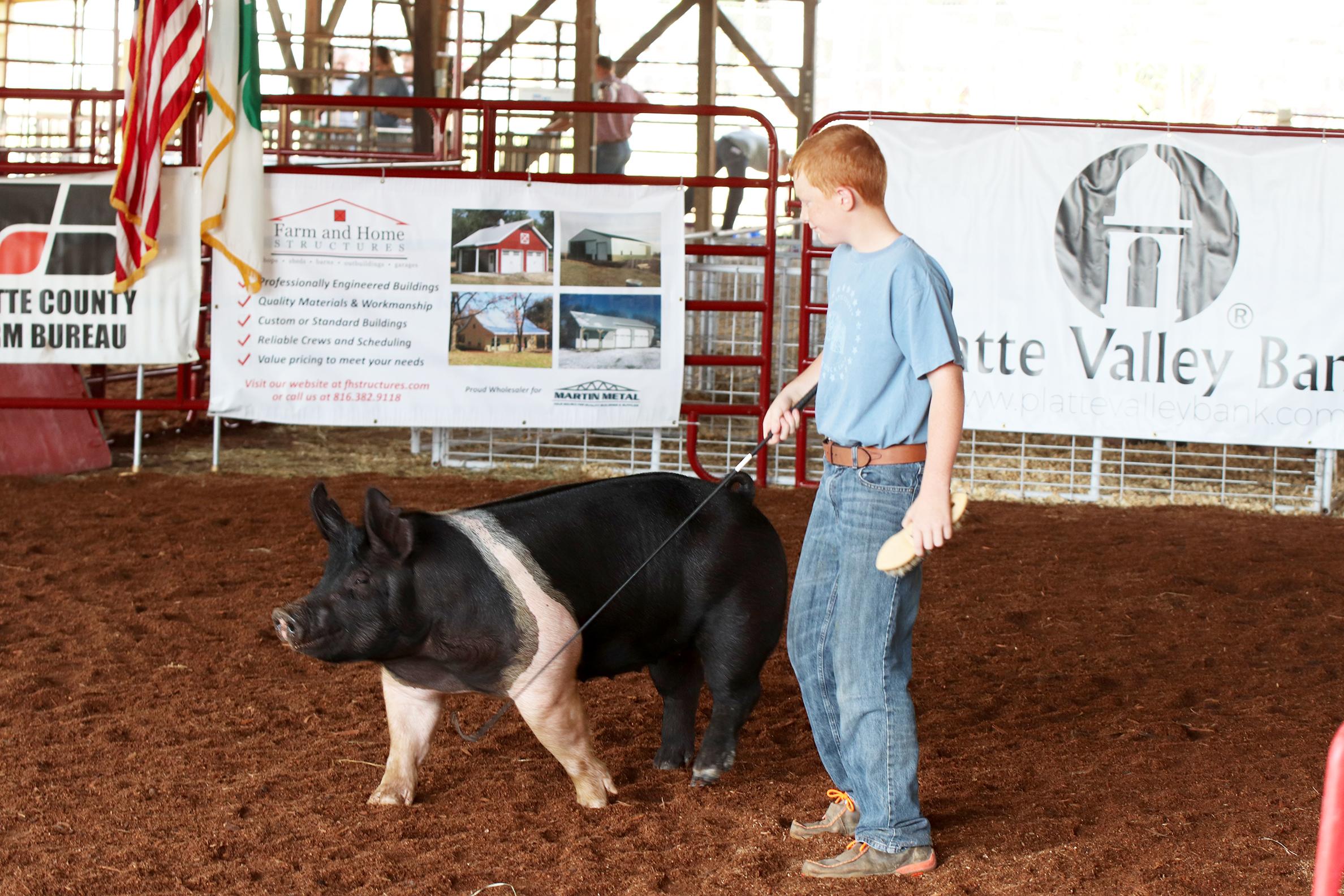 Livestock 10.jpg