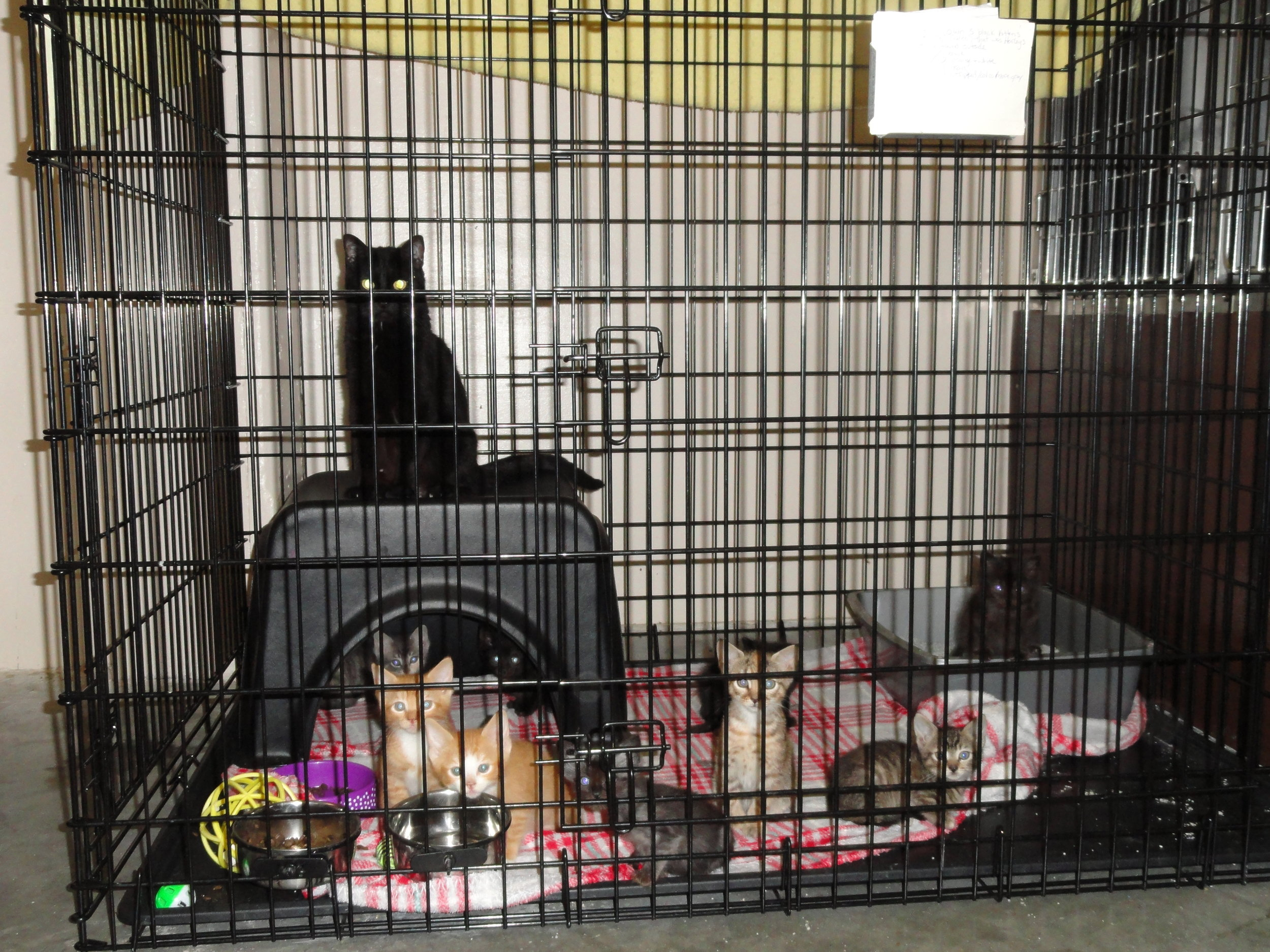 RIMSIE MCCONIGA/Special to the Citizen Pictured are 11 cats at a new animal shelter in Leavenworth, Kan. The shelter will accept animals from the Platte City area.